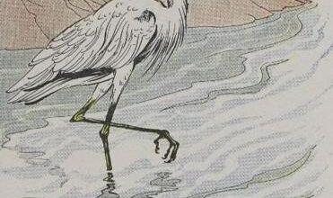 Aesop The Heron