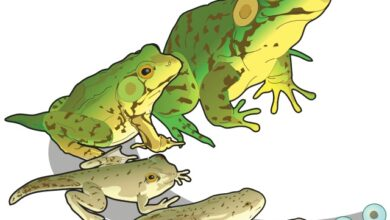 Green frog, how many stages? Count them