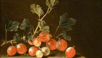 Adriaen Coorte, Gooseberries on a Table, 1701
