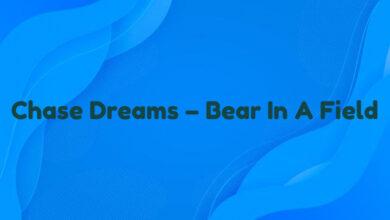 Chase Dreams – Bear In A Field